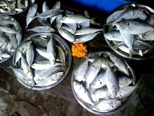 fisk2b